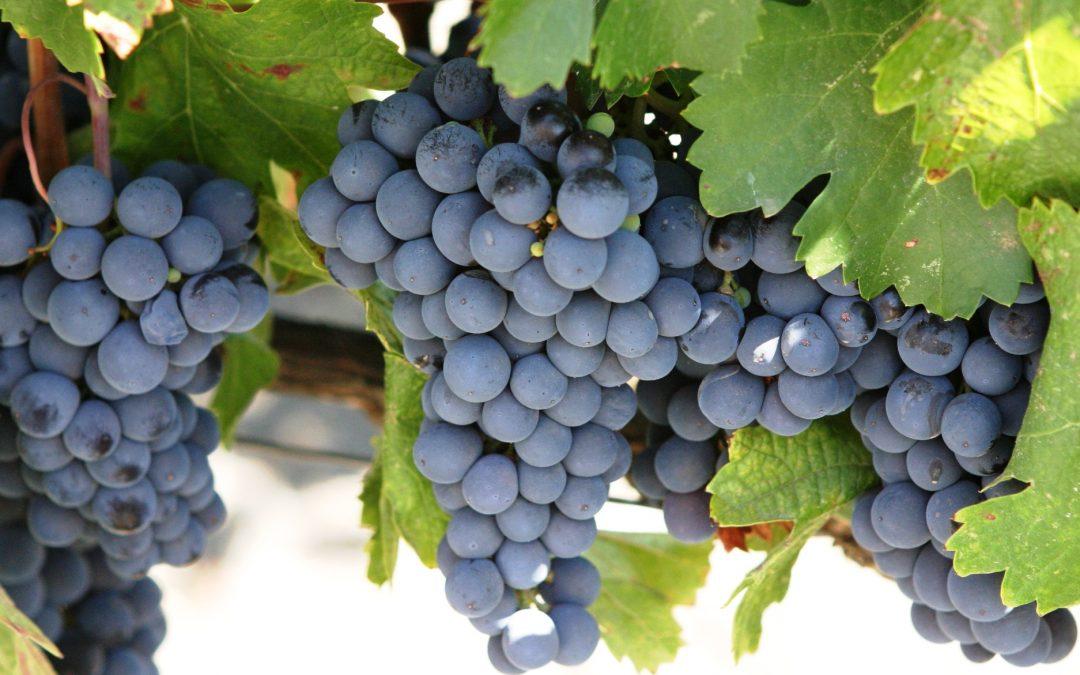 Wine Varietal Series: Cabernet Sauvignon